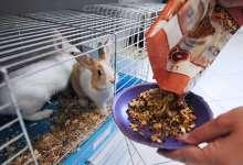 Торговлю животными запретить